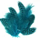 Spotted Guinea hen feathers 1/4 oz packet Body Plummage Turquoise Blue