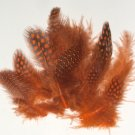Spotted Guinea hen feathers 1/4 oz packet Body Plummage Orange