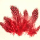 Spotted Guinea hen feathers 1/4 oz packet Body Plummage Red