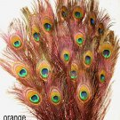 Peacock eye feathers Stem Dyed 100 ORANGE L 30-35""