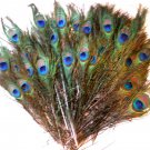"50 Peacock Eye Feathers 10-15"" L Natural Iridescent"