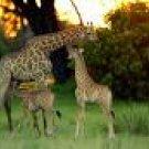 Cape Town and Sabi Sand - 7 Days Safari