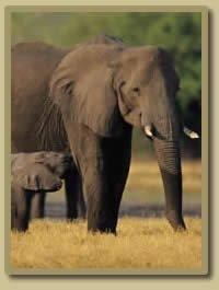 Kruger Park - 4 Days Sabi Sand Safari
