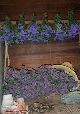 Dried Flowers-Ageratum