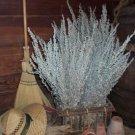 Dried Flowers-Artemisia - Silver King-Artemisia albula