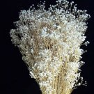 Dried Flowers-Baby's Breath - preserved - Double - Gypsophilia