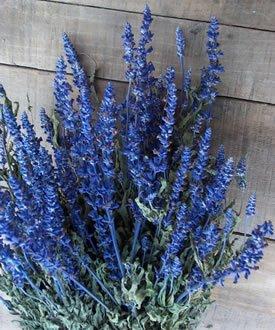 Dried Flowers-Blue Salvia -