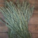 Dried Flowers-Bromus formus - Brome Grass