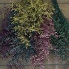 Dried Flowers-aspia - Preserved - Misty
