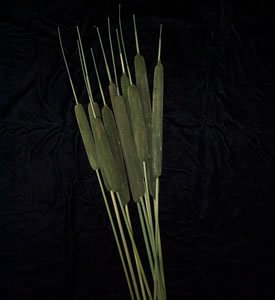 Dried Flowers-Cat-Tails - dyed