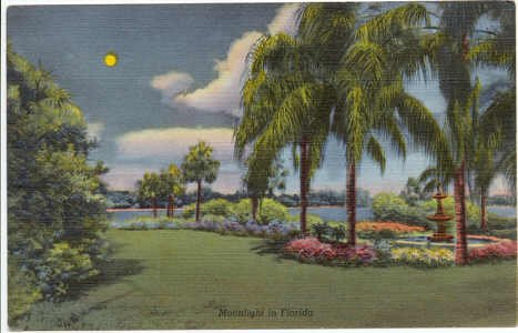 Moonlight in Florida  Vintage Linen Postcard  1943  C.T. Art-Colortone  FLA #0060