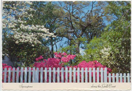 Springtime along the Gulf Coast - Azaleas and Dogwoods  Chrome Postcard #0083