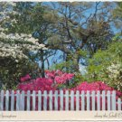 Springtime along the Gulf Coast - Azaleas and Dogwoods  Chrome Postcard #0083