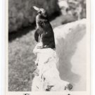 """PENGIE"" Catalina's Tropical Penguin Catalina Bird Park CA Postcard RPPC Frashers #0302"