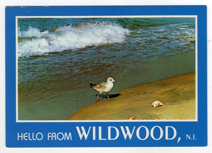 Hello from WILDWOOD, N.J. Postcard Gull at water edge #0370