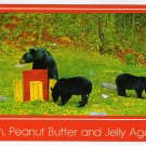 Black Bears Postcard Photo by Joyce L. Haynes