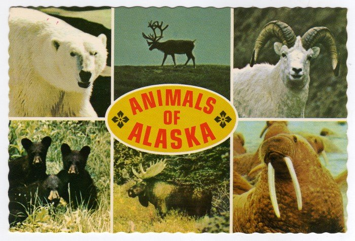 Animals of Alaska multi-photo postcard Mike Roberts