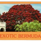Exotic Bermuda postcard blooming poinciana tree Hamilton #0461