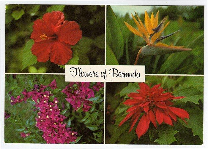 Flowers of Bermuda postcard  Red Hibiscus, Bird of Paradise, Bougainvillaea, Poinsettia  #0462