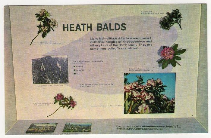Heath Balds Exhibit Sugarlands Visitor Center Great Smoky Mountains National Park Gatlinburg TN 506