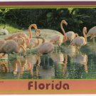 Florida Pink Flamingos Postcard Photo by Werner J. Bertesh Scenic Florida Dist FL FLA  #0530