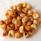 Vintage Escargot Snail Shells - 3 Dozen Plus One Extra - For Gourmet Recipes, Display, Crafts