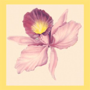 Vintage WRAPPING PAPER Scrapbooking ORCHID BLOSSOM