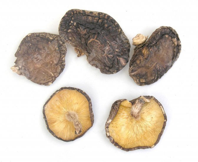 1 kilo Dried Organic Koshin Pack-shiitake mushoom