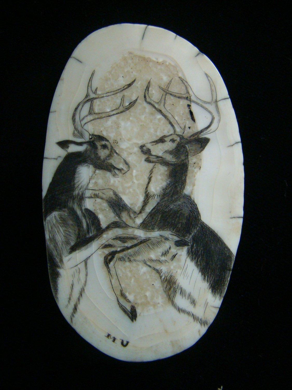 "Vintage Scrimshaw "" Fighting Deer Bucks ""  3 1/8"" Fossil Walrus Ivory - Wood Frame with Velvet"